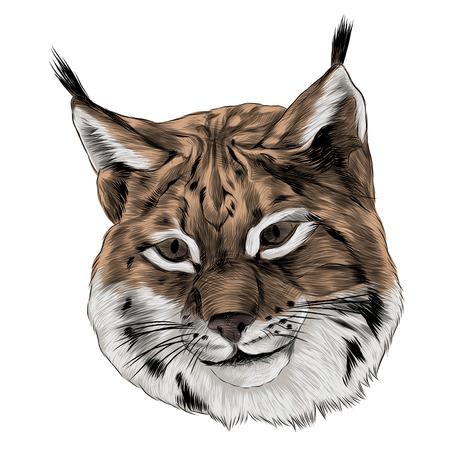 Lynx hoofd schets grafisch ontwerp.