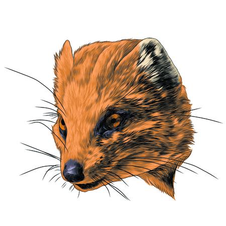 Mongoose schets grafisch ontwerp. Stock Illustratie