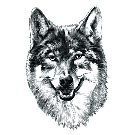 Wolf head sketch graphic design.