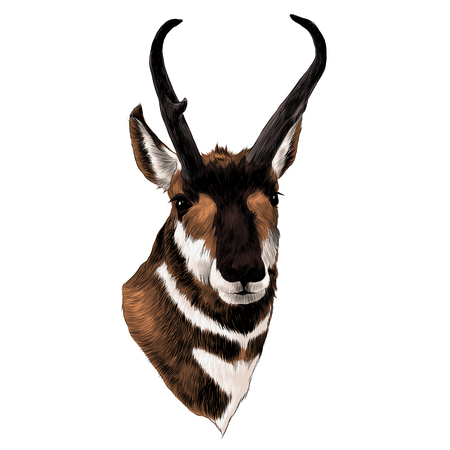 Pronghorn head sketch graphic design. Çizim