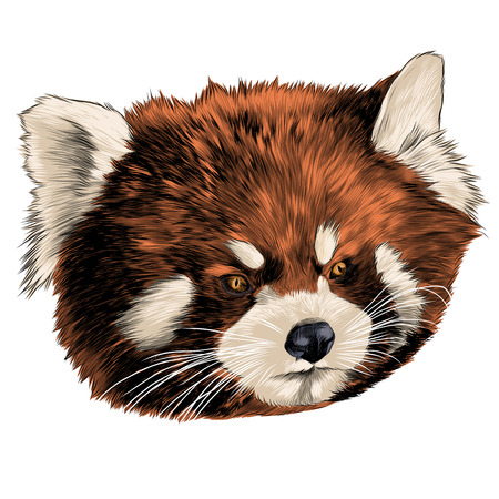 Red Panda head sketch graphic design.