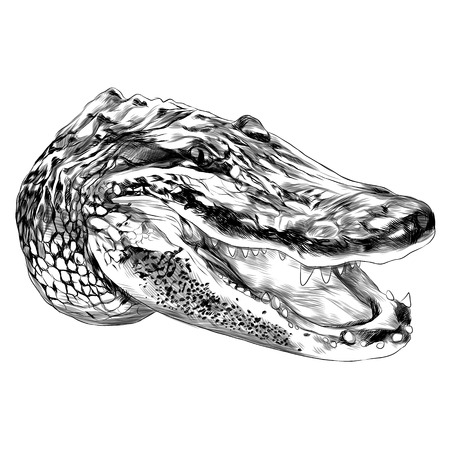 Alligator sketch graphic design.
