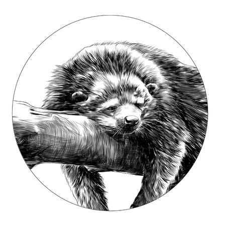 Civet schets grafisch ontwerp. Stock Illustratie