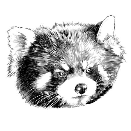 Panda head sketch graphic design. Illustration