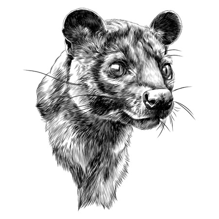 Fossa sketch graphic design.