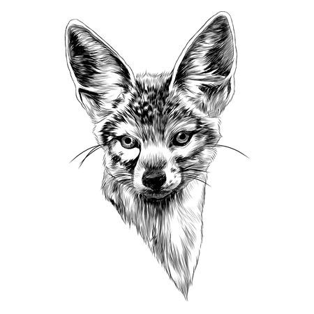 Jackal sketch graphic design.