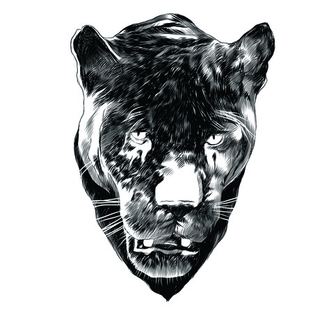 Panther sketch graphic design.