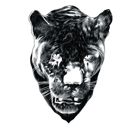 Panther sketch graphic design. Banco de Imagens - 91604566