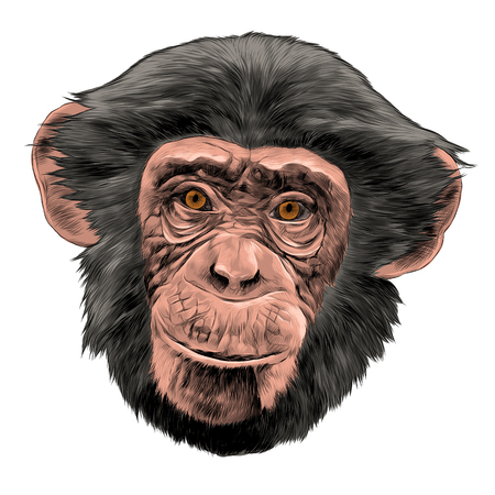 Monkey head sketch graphic design. Stok Fotoğraf - 91604567