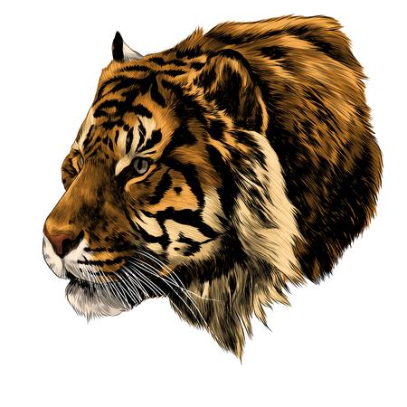호랑이 머리 스케치 그래픽 디자인. 일러스트