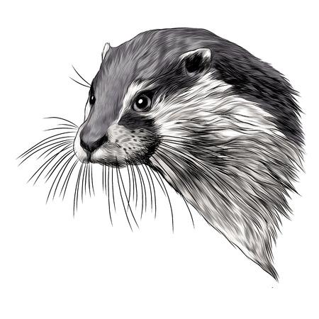 Otter schets grafisch ontwerp. Stock Illustratie