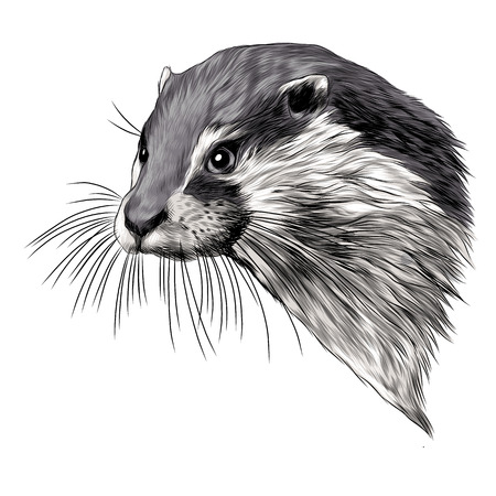 Otter sketch graphic design. Ilustracja