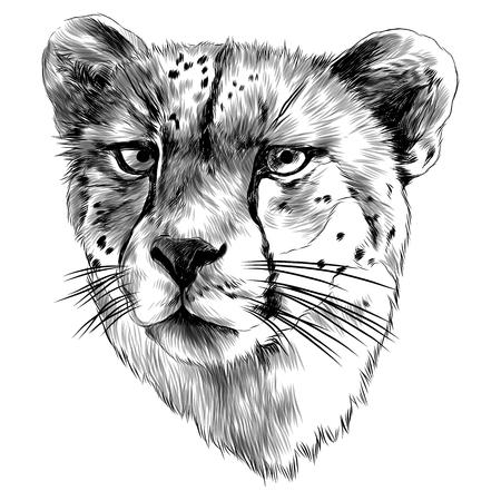 Cheetah head sketch graphic design.  イラスト・ベクター素材