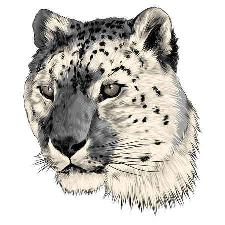 Snow leopard head sketch graphic design.