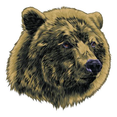 Bear ascolta il disegno grafico dello schizzo. Archivio Fotografico - 91604572
