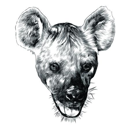 하이에나 머리 스케치 그래픽 디자인입니다. 스톡 콘텐츠 - 91604574