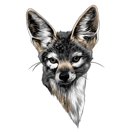 Jackal head sketch graphic design.