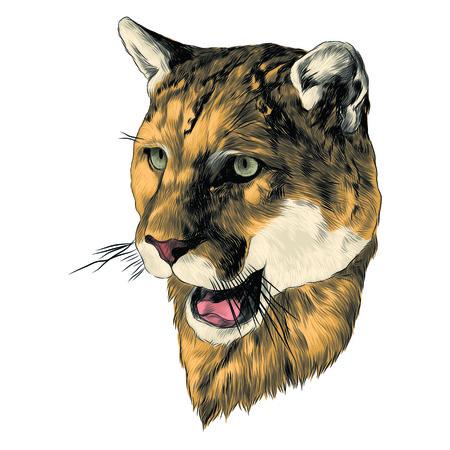 Tiger sketch graphic design.