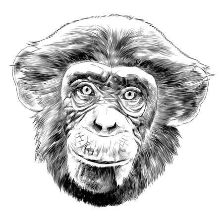 Monkey head sketch graphic design. Vettoriali