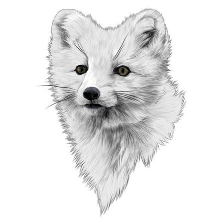 북극 여우 스케치 그래픽 디자인.