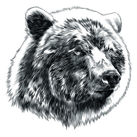 Bear head sketch graphic design.