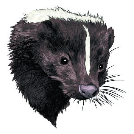 Skunk head sketch grafisch ontwerp. Stock Illustratie