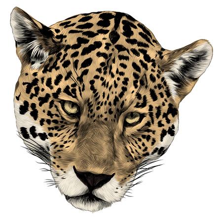 Jaguar head sketch graphic design.  イラスト・ベクター素材