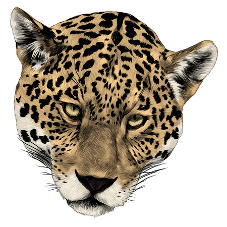 Jaguar head sketch graphic design. Vettoriali