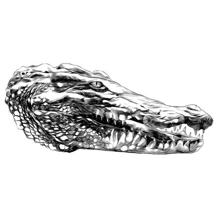Disegno grafico di schizzo di coccodrillo. Archivio Fotografico - 91604703