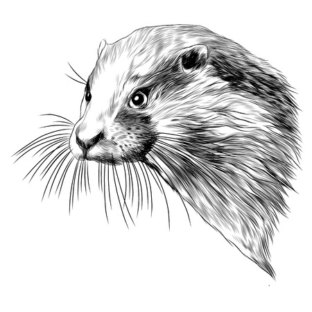Otter head sketch graphic design.