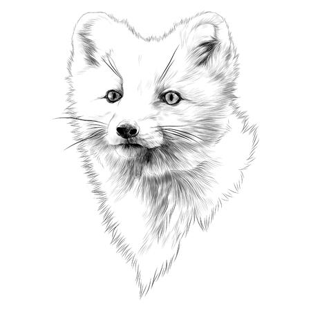 북극 여우 머리 스케치 그래픽 디자인.