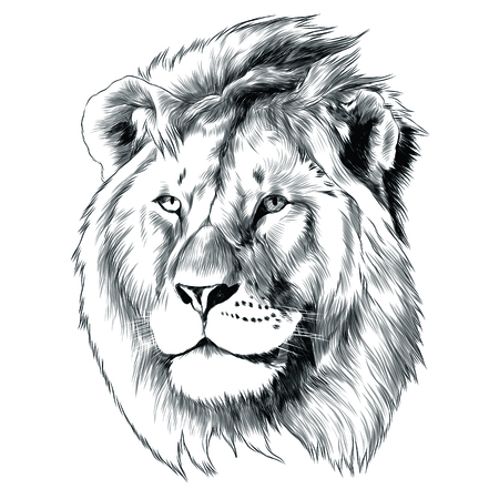 Sketch of lion head  graphic design.