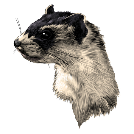 Ferret head sketch graphic design.