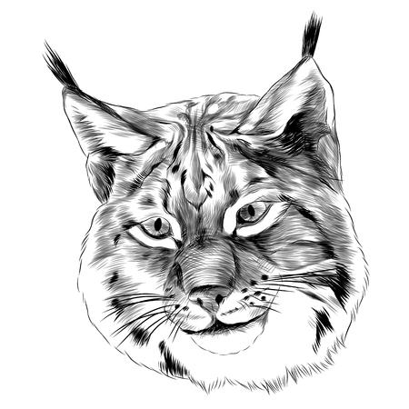 Lynx 머리 스케치 그래픽 디자인입니다. 일러스트
