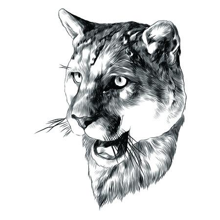 虎の頭は、グラフィック デザインをスケッチします。  イラスト・ベクター素材