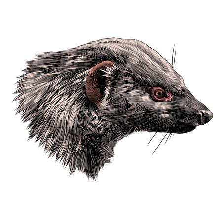 Civet Mungo head sketch graphic design.