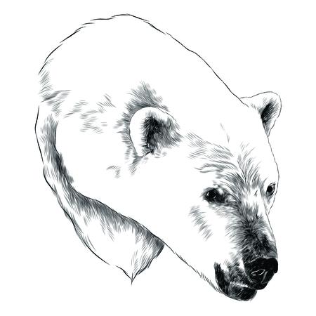 Diseño gráfico del bosquejo de la cabeza del oso polar. Foto de archivo - 91604845