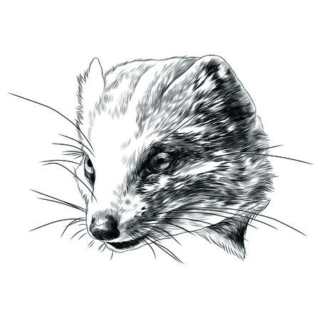 Mongoose head sketch graphic design.