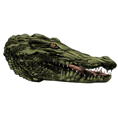 Crocodile head sketch graphic design. Stok Fotoğraf - 91604847