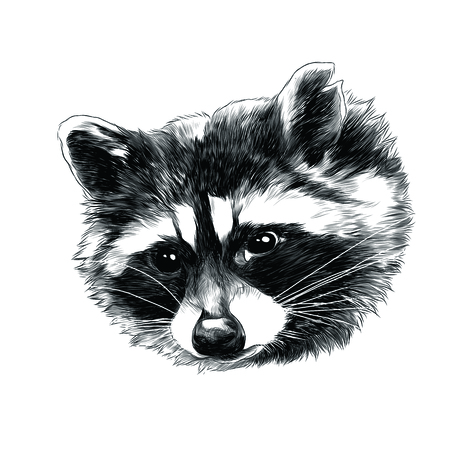 Raccoon head sketch graphic design. Çizim