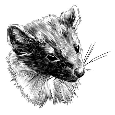 Marten head sketch graphic design.