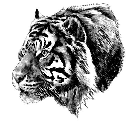 Tiger head sketch graphic design. Vettoriali
