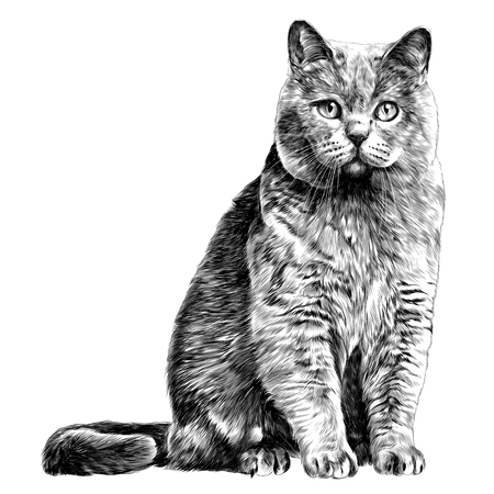 cat sketch vector graphics monochrome black-and-white drawing Stok Fotoğraf - 95734187