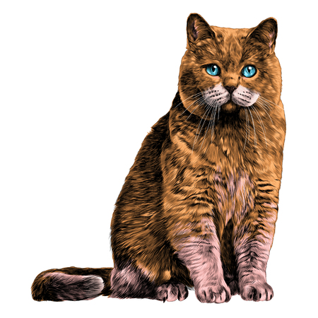 Cat sketch illustration. Vector graphics color picture on white background.