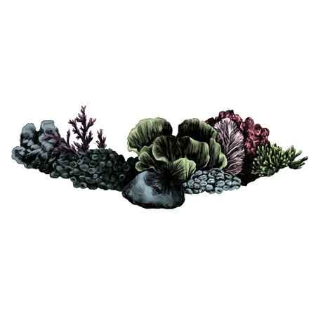 Corals sketch illustration. Vector graphics, color picture.