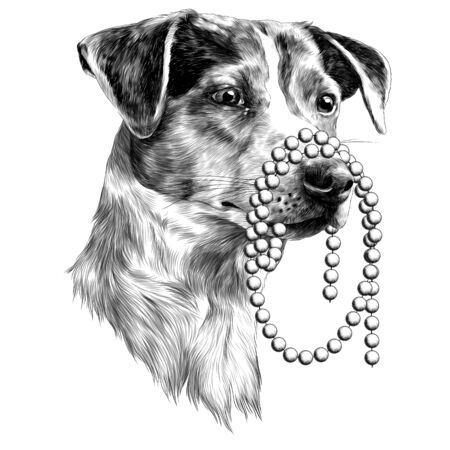 The dog with a beads in my mouth. Jack Russell Terrier head sketch. Vector graphics monochrome, black-and-white drawing. Illustration