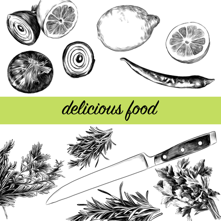 Lemon pepper parsley onion knife, green sketch. Vector graphics monochrome, black-and-white drawing. Иллюстрация