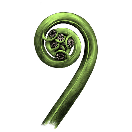 Curl fern sprout spiral sketch. Vector graphics, color picture,