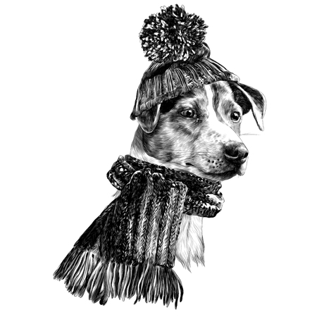 Dog in hat and scarf Jack Russell Terrier head, winter clothing sketch. Vector graphics monochrome, black-and-white drawing,