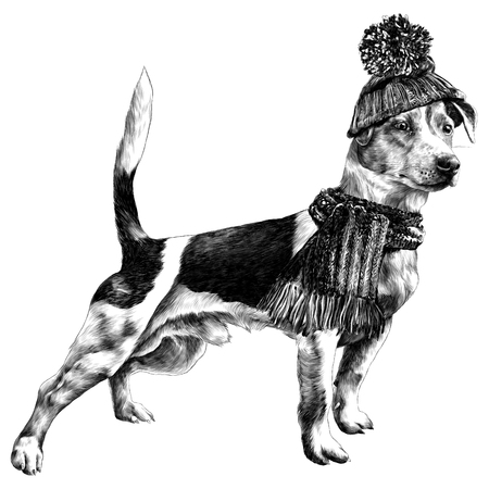 Dog in hat and scarf Jack Russell Terrier, winter clothes sketch. Vector graphics monochrome, black-and-white drawing.